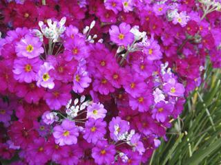 庭に咲いてる花